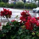 Прибалтийское лето продолжается: чуть выше +20 и кратковременные дожди
