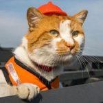 Символ Крымского моста кот Мостик нашел новую работу