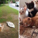 Пик жестокости! 11 котят в Салдусе завязали в мешки и оставили умирать