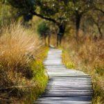 Треть населения Эстонии посещает тропы здоровья