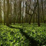 Полиция: основные рекомендации при походе в лес