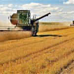 Россия соберёт урожай зерновых, близкий к рекордному, несмотря на пандемию