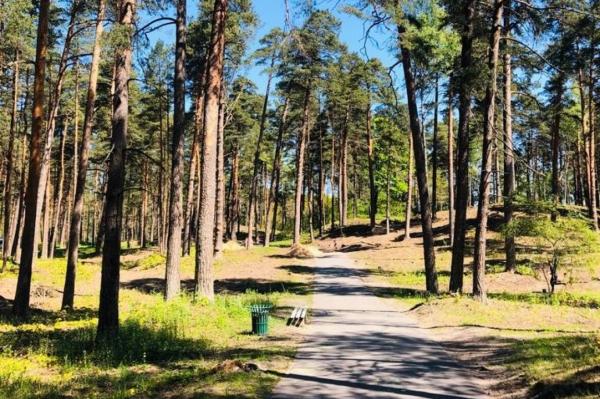 Глава Rīgas meži не согласен с противниками вырубки леса