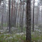 Латвийский фенолог: сегодня по погоде можно определить, какой будет зима