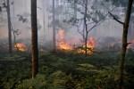В лесах Латвии заканчивается пожароопасный период