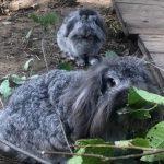 Кроликов нашли в мусорнике Пурвциемса; новая тенденция латвийского живодерства
