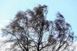 Синоптики дали прогноз ну субботу – опять ветер