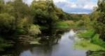 В реке Невежис массово погибла рыба