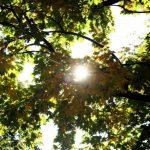 Во вторник в Латвию вернется солнце
