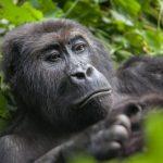 В Фонде природы рассказали о сокращении популяции животных в мире более чем на две трети