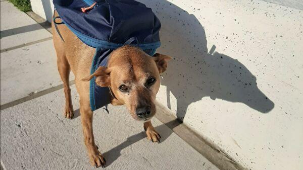 В Италии пса наградили за помощь во время пандемии