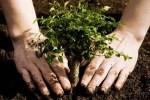 Мировой Субботник уже завтра! Латвийцев призывают сажать деревья-счастья