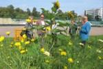 Таллинские власти решили поддержать общинные городские огороды