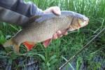 Здесь рыба есть: рыбачим с поплавком на перекате
