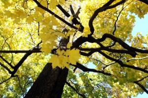 Синоптики рассказали, какой погодой нас проводит последний день октября