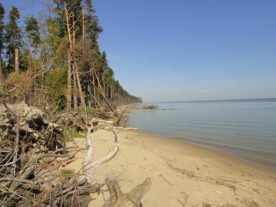 На дне Балтийского моря и Куршского залива – слишком много ртути, никеля, цинка