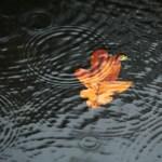 В понедельник усилится ветер, во многих районах ожидается небольшой дождь