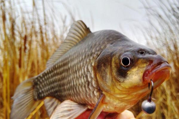 Здесь рыба есть: как поздней осенью поймать карася