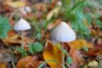 В столице США проголосовали за легализацию галлюциногенных грибов