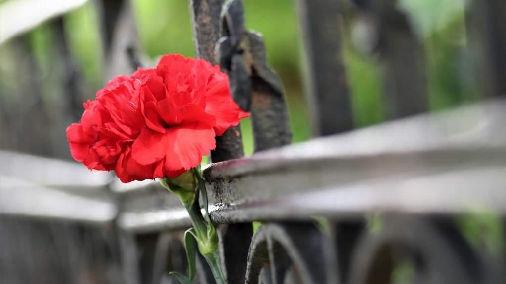 В пригороде Севастополя нашли останки мирных жителей, расстрелянных нацистами