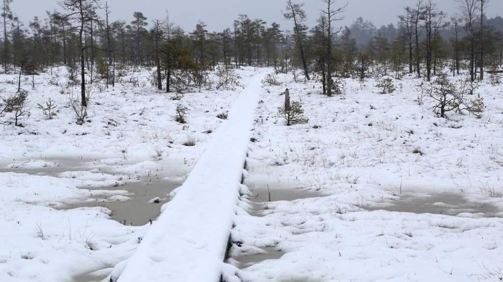 Латвию открывают заново: найдены доселе неизвестные пещеры, растения и грибы