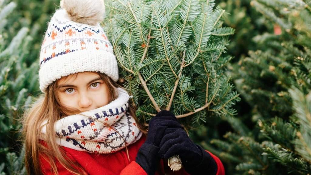 О новогодних ёлках в Латвии: проще срубить, чем купить