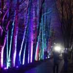 Полиция будет регулировать движение людей в украшенных рижских парках