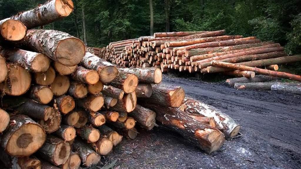 В Эстонии цена за круглый лес одна из самых высоких в Европе