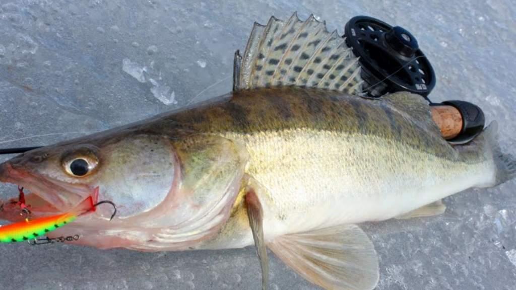 Здесь рыба есть. Ну, по крайней мере, должна быть: как ловить рыбу в глухозимье