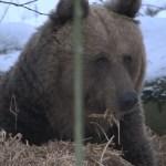 Зоопарк Элиствере установил рекорд посещаемости