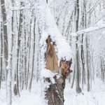 Сильный снегопад в Латгале местами поломал деревья