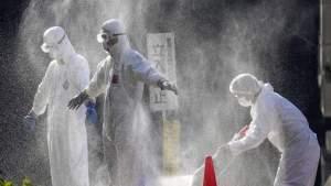 Вспышка птичьего гриппа в Японии стала самой масштабной за всю историю страны