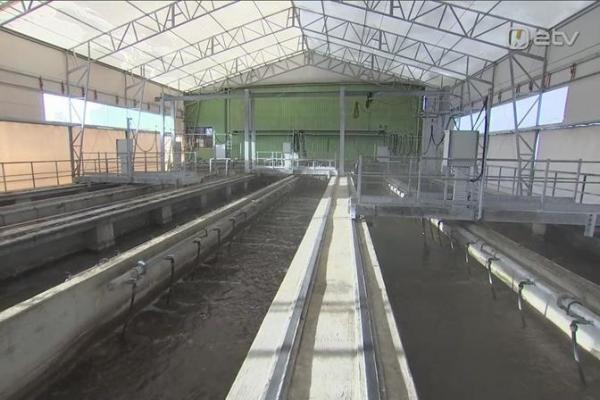 Исследование сточных вод показывает высокое распространение коронавируса по всей Эстонии