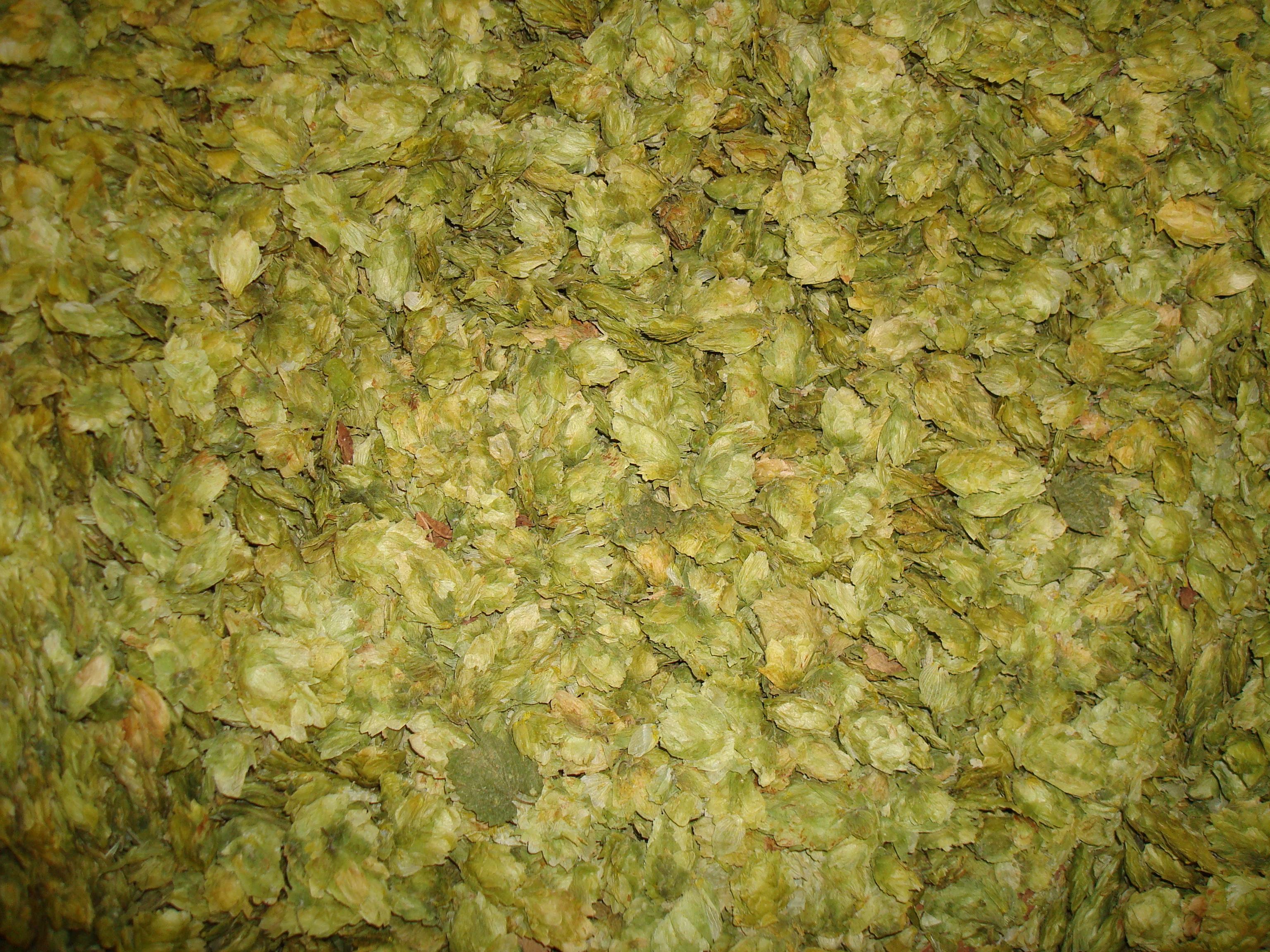 Fresh hops.
