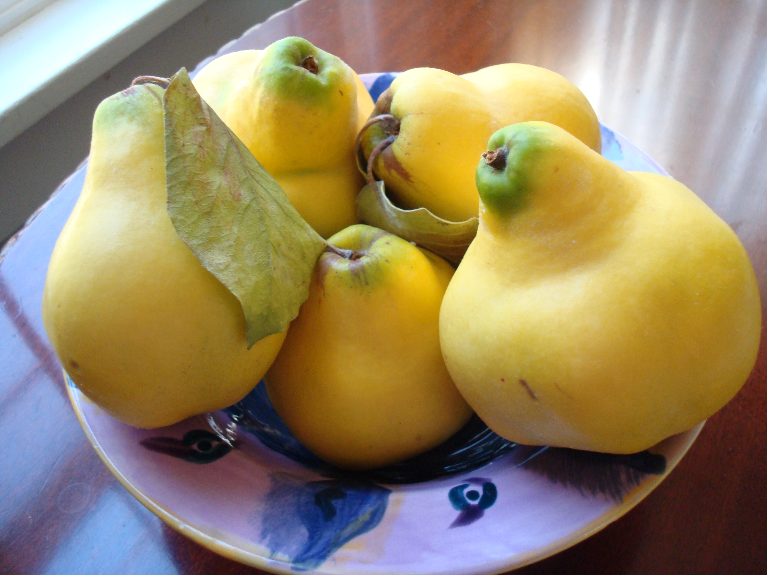 These Oregon quinces are ripe. You can see-and especially smell-the difference.