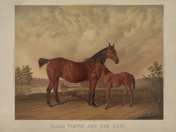 Flora Temple and her colt, courtesy the Library of Congress