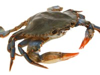 "Get Your Fill of Stand-Up and Seafood with ""Comedy & Crabs"""