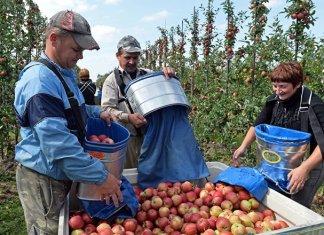 Wegen Wirtschaftsmigration aus Ukraine: Lohndumping im Baltikum befürchtet