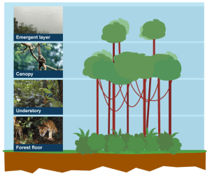 Tropical Rainforest Emergent Layer Clip Art – Cliparts