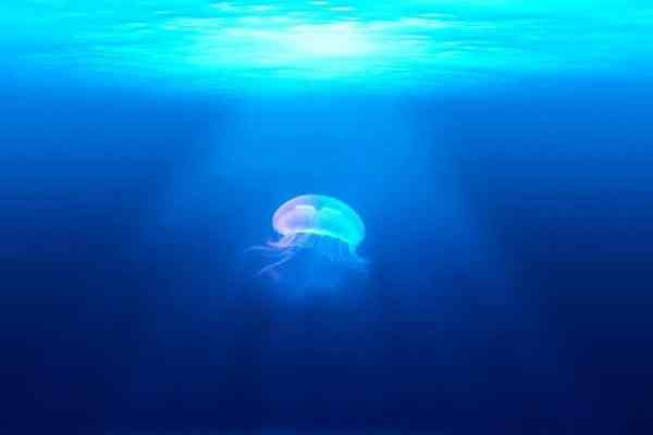 méduse dans l'océan