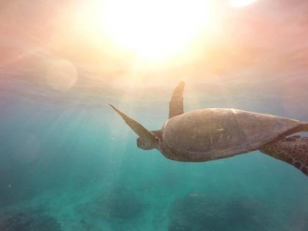 tortue nage sous le soleil