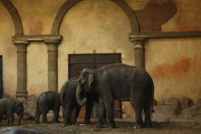 Elefanti allo zoo di Amburgo