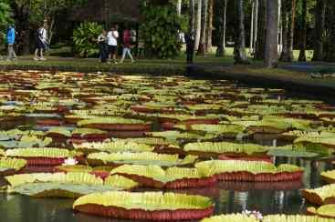 Jardin Pamplemousses
