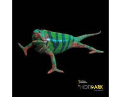 Clarks Kids x National Geographic