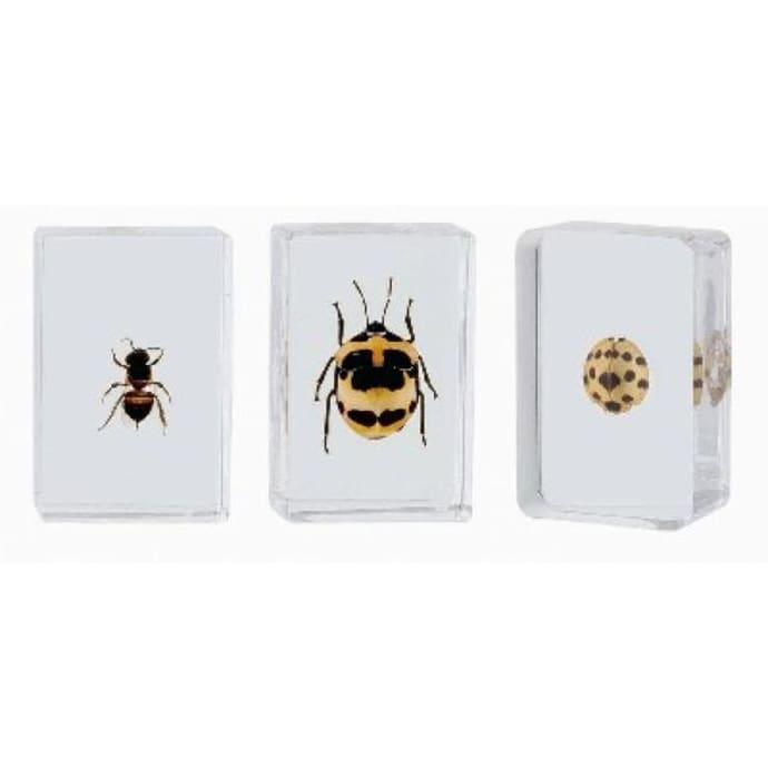 Bug Specimens