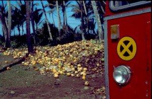 Sri Lanka - Kokonüsse am Wegesrand
