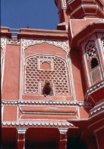 Jaipur PW Affe