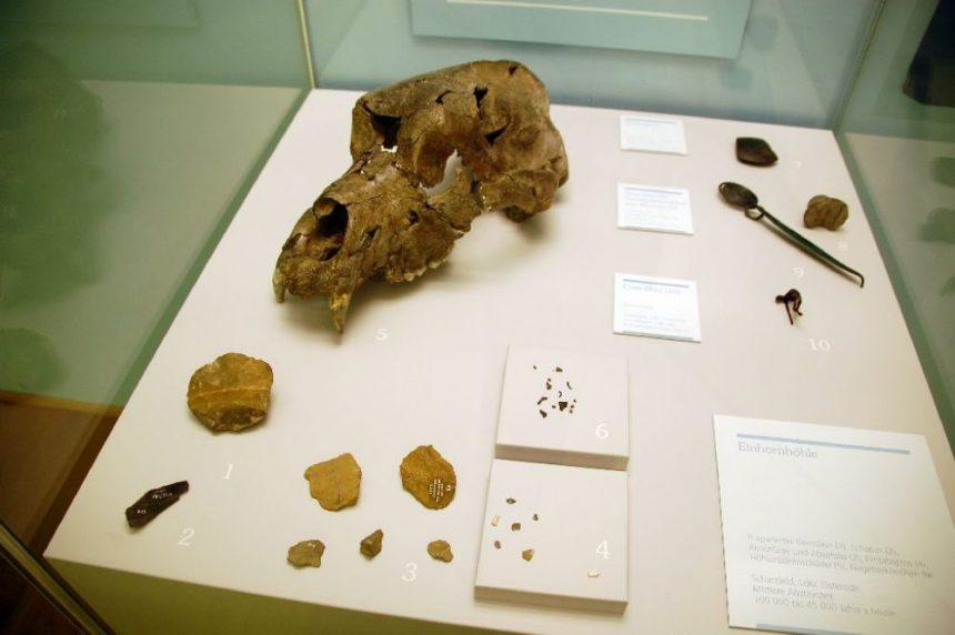 Funde aus der Einhornhöhle in der Ausstellung MenschenWelten