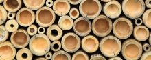 BAMBOO PAPER: TREE-FREE AND SUSTAINABLE