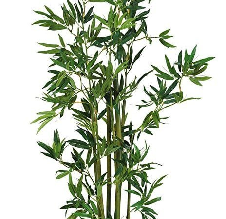 Bringing Life To Your Home With Indoor Bamboo Plants